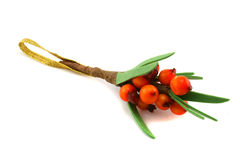 Branch of sea-buckthorn. Branch of sea-buck-thorn on a white background Stock Images