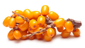 Branch of sea buckthorn berries, clipping paths Stock Images