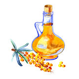 Branch of sea buckthorn. Oil bottle illustration. Royalty Free Stock Photo