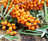 Branch of Seabuckthorn Berries Stock Photo