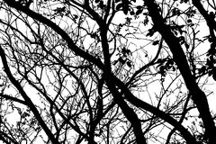 Branch shape with black color. Royalty Free Stock Image