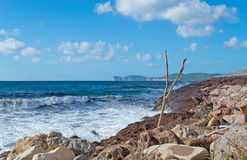 Branch by the shore Royalty Free Stock Image