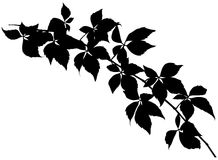 Branch Silhouette Royalty Free Stock Photo