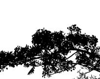 Branch silhouette Royalty Free Stock Images