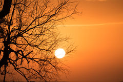 Branch Silhouette Sunset Royalty Free Stock Photos