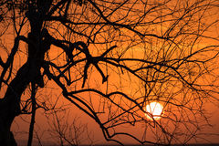 Branch Silhouette Sunset Royalty Free Stock Image