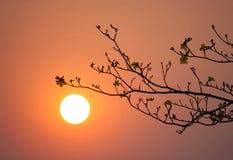 Branch silhouette sunset Stock Photos