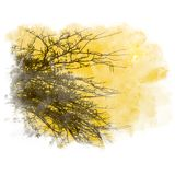 Branch silhouette watercolor painting retouch. Branch silhouette with sun in twilight sky. Watercolor painting retouch Royalty Free Stock Photos