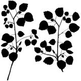 Branch Silhouettes Royalty Free Stock Photography