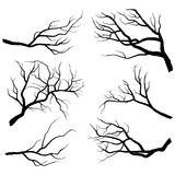 Branch Silhouettes Royalty Free Stock Image