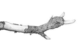 Branch sketch Stock Images