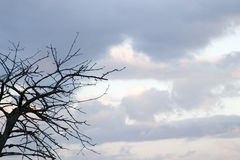 Branch and Sky. A leafless branch in autumn sky royalty free stock images