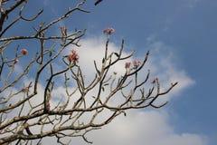 Branch on sky background Royalty Free Stock Photo