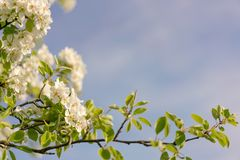 Branch, Sky, Blossom, Spring stock photo