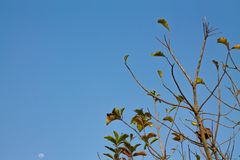 Branch and sky stock images