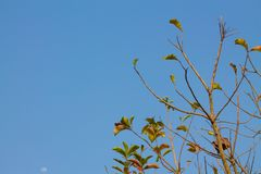 Branch and sky royalty free stock image