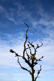 Branch in the sky Royalty Free Stock Image
