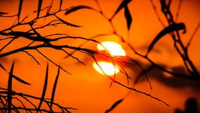 Branch, Sky, Sun, Leaf Royalty Free Stock Images