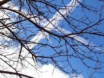 Branch, Sky, Tree, Leaf Stock Image