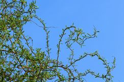 Branch, Sky, Tree, Leaf Royalty Free Stock Photo