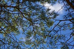 Branch, Sky, Tree, Leaf Stock Photography