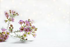 Branch of small flowers white background bokeh stock photos