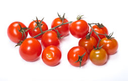 Branch with small Tomatoes #1. Branch with small red cherry tomatoes Royalty Free Stock Images