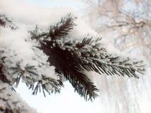 Branch in snow Stock Photo