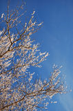 Branch in snow. At winter royalty free stock image