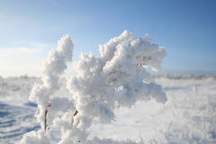 Branch in snow. Branch in the field covered with snow Royalty Free Stock Photos