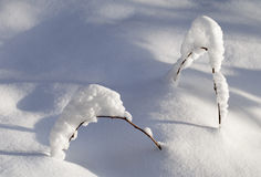 Branch in the snow Stock Photography