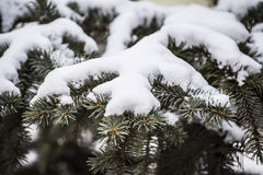 Branch with snow Stock Photos