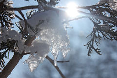 Branch, snow and sun light Royalty Free Stock Photo