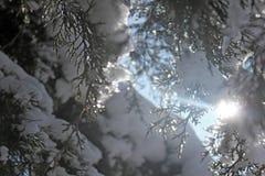 Branch, snow and sun light Stock Photos