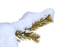 Branch in the snow Royalty Free Stock Photo