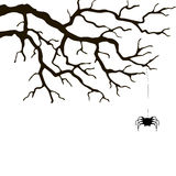 Branch and spider Royalty Free Stock Images