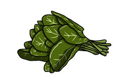 Branch of spinach illustration Royalty Free Stock Images