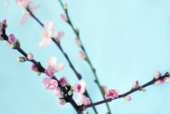 Branch of spring flowers Royalty Free Stock Photo