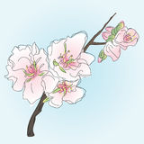 Branch with spring flowers, blooming Stock Images