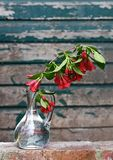 A branch of Spring flowers in a glass vase Royalty Free Stock Images