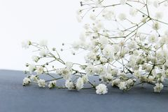 Branch of spring flowers on table stock images