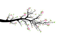 Branch of Spring Tree Stock Photography