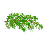 Branch spruce Christmas tree vector illustration Royalty Free Stock Images