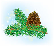Branch of spruce with pine cone Royalty Free Stock Image