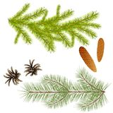 Branch of spruce and pine trees with cones for decoration, desig. N of New Year greeting cards, creation of composites with coniferous trees. Isolate Stock Photography