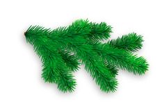 Branch of spruce with soft shadow on white background. Vector. Illustration Stock Image