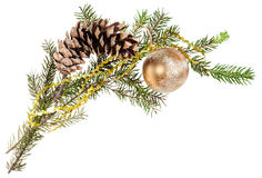 Branch of spruce tree with cone and gold ball Stock Image