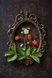 Branch of a strawberry in frame. Branch of a strawberry with berries on a wooden old board and vintage frame Royalty Free Stock Photo