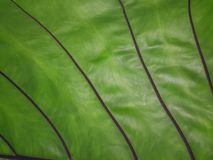 Branch structure of green leaves, beautiful lines. Stock Photography