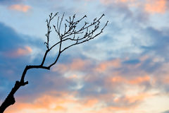 Branch in sunset Stock Image